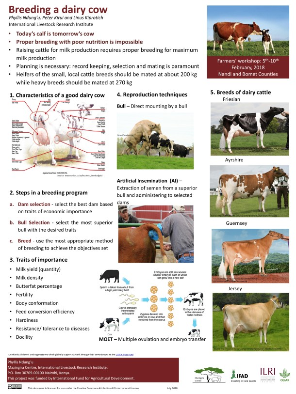 Breeding a dairy cow_poster