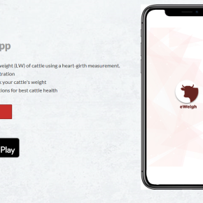 ILRI 'eWeigh' mobile phone app to help farmers accurately estimate live weight of theircattle